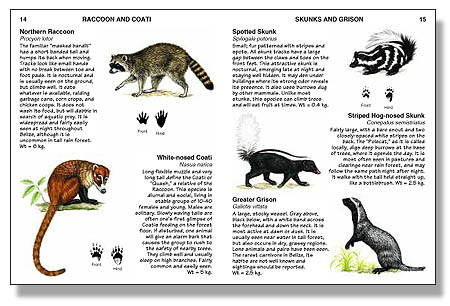 Mammals of Belize